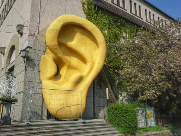 Технологии ликвидации ушей у стен